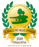 finalista 2019